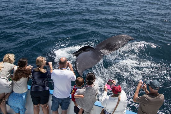 Newport Beach, Kaliforniya: Whale Watchers Viewing Humpback Whale On Cruise