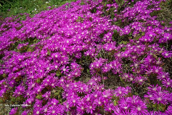 Orto Botanico: Piante grasse in fiore