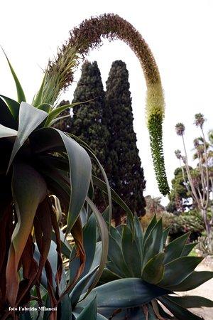 Orto Botanico: Uno strano fiore