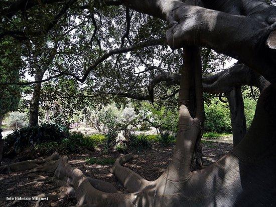 Orto Botanico: Un angolo particolarmente suggestivo