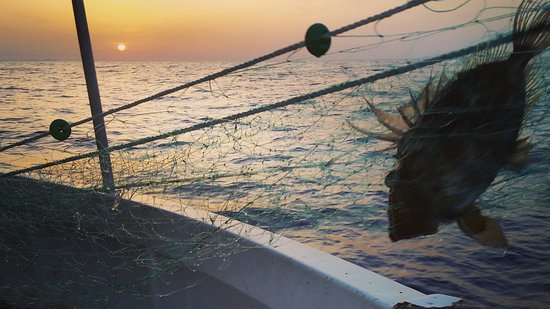 Mallorca Fishing Charter: Gallo de san pedro