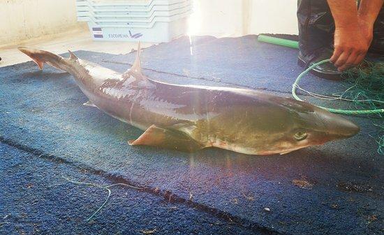 Mallorca Fishing Charter: Cazón