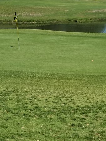 best dating tampa florida golf courses