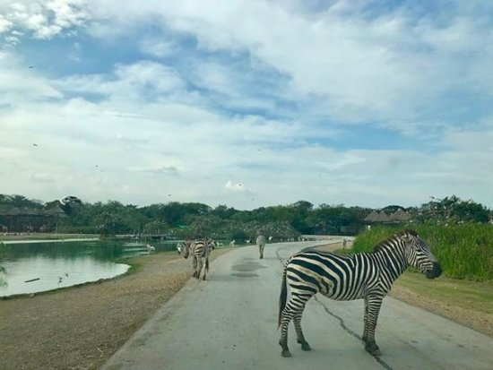 Safari World and Marine Park, Bangkok, Thailand - Picture of