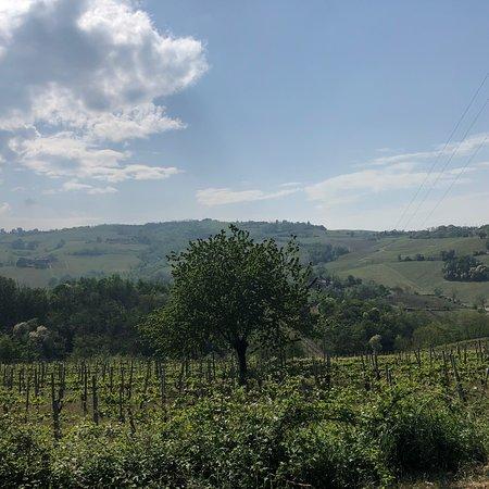 Bilde fra Canevino
