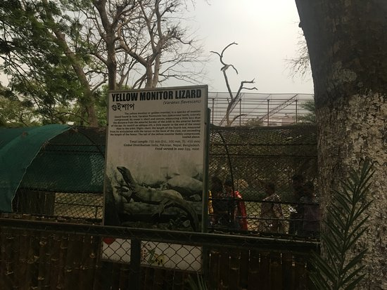 Assam State Zoo and Botanical Garden: monitor lizard