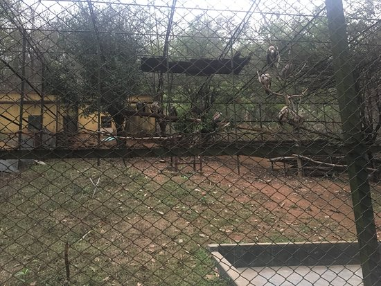 Assam State Zoo and Botanical Garden: vultures