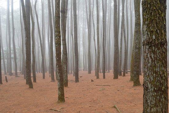 Imogiri, Ινδονησία: suasana hutan pinus di pagi hari