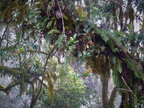 Provincia de San José, Costa Rica: An Epiphyten kein Mangel...