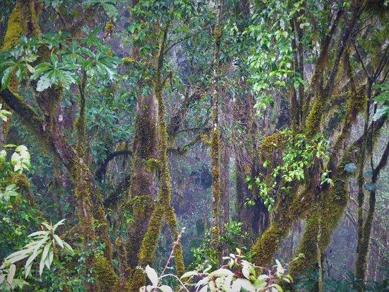 Provincia de San José, Costa Rica: Im Nebelwald (2)