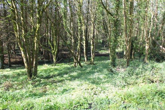 Castlecomer, Irlandia: Beautiful nature