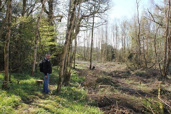 Castlecomer, Irlandia: Sadness of tree felling