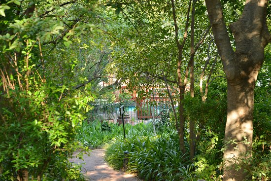 Rivonia Bed & Breakfast Garden Estate : A glimpse of the pool through our garden paths