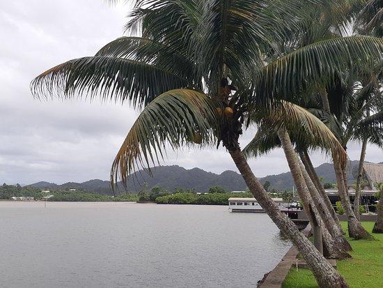 Lami, Fiyi: swaying nuts