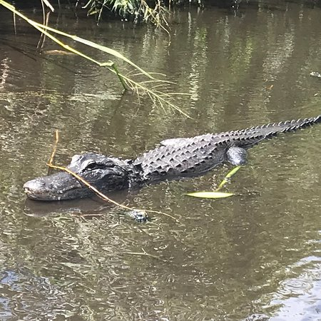 Everglades Swamp Tours Reviews