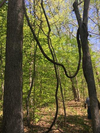 Crow S Nest Nature Preserve Fredericksburg 2019 All