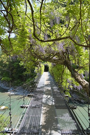 Fuji Bridge