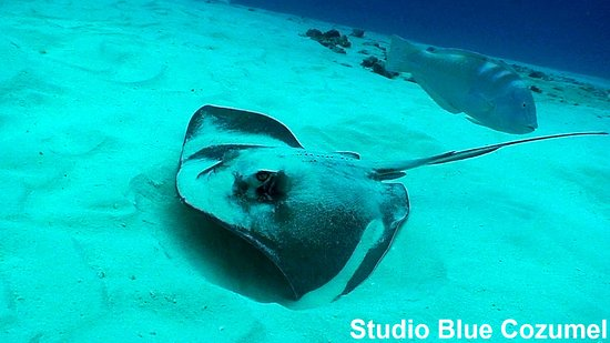Studio Blue Cozumel