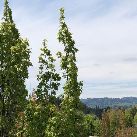 McMenamins Hotel Oregon: photo3.jpg