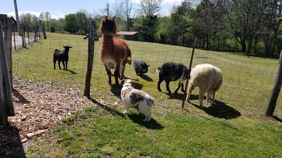 Sunrise Farm Bed and Breakfast: Farm friends at Sunrise Farm  B&B