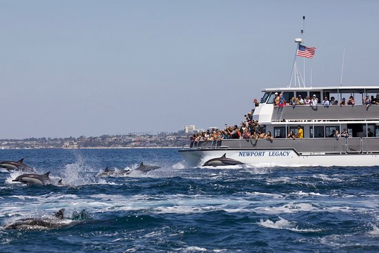 Newport Beach, Kaliforniya: Newport Legacy primary whale watching ship viewing dolphin pod