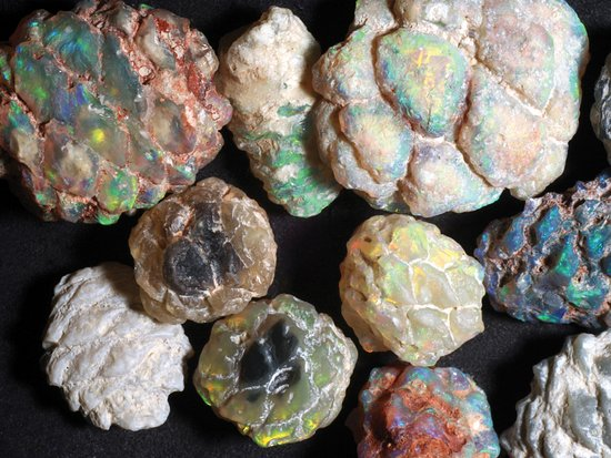 Lightning Ridge, Australien: 100 million-year-old opalised pine cone fossils at the Australian Opal Centre.