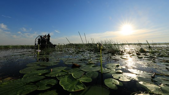 Mary River National Park, Australia: EARLY MORNING LILLIES
