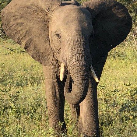 Mala Mala Private Game Reserve, South Africa: photo2.jpg