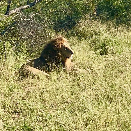 Mala Mala Private Game Reserve, South Africa: photo3.jpg