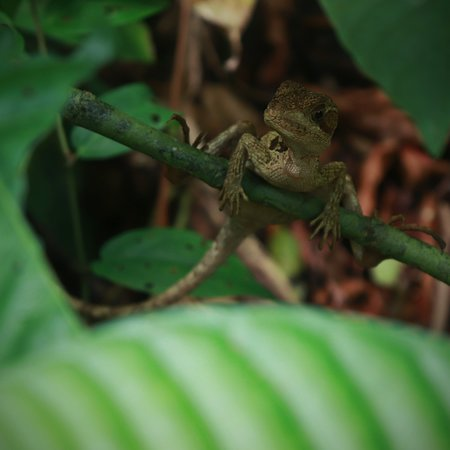 Tortuguero, Costa Rica: This is the Jesus Christ Lizard just one of the coolest animal of this amazing national park.