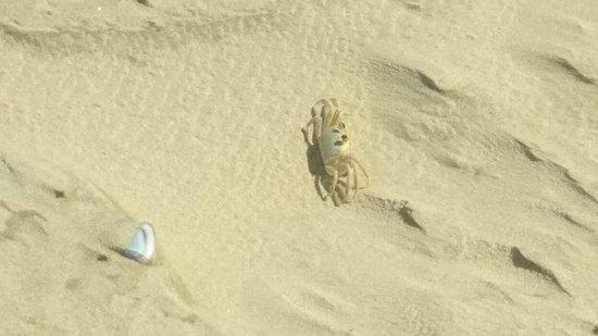 Tramandai Beach ภาพถ่าย