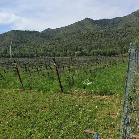 Devitt Winery and Vineyards Photo