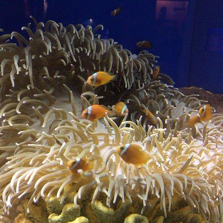 Shanghai Ocean Aquarium: photo1.jpg