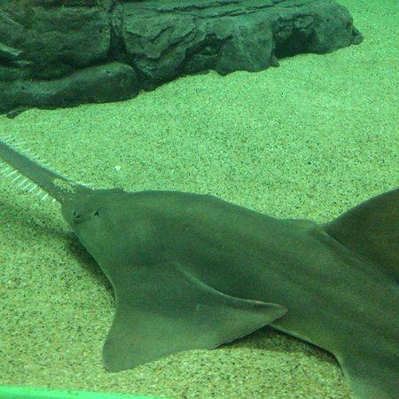 Shanghai Ocean Aquarium: photo2.jpg