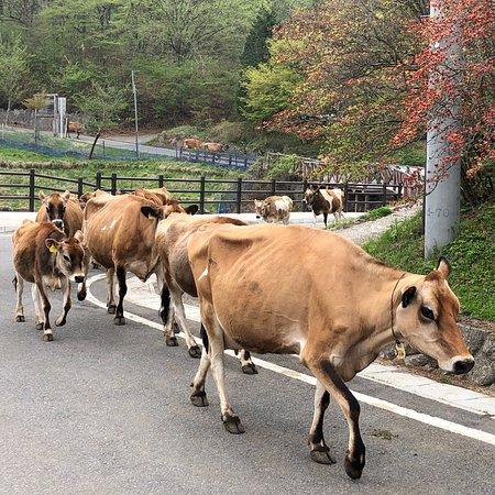 Kozu Farm
