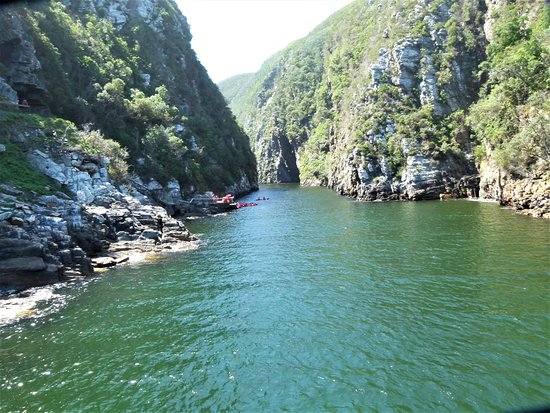 Garden Route (Tsitsikamma, Knysna, Wilderness) National Park: View from one of the suspension bridges