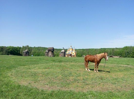 Pirogovo Open-Air Museum: Поле среди мельниц