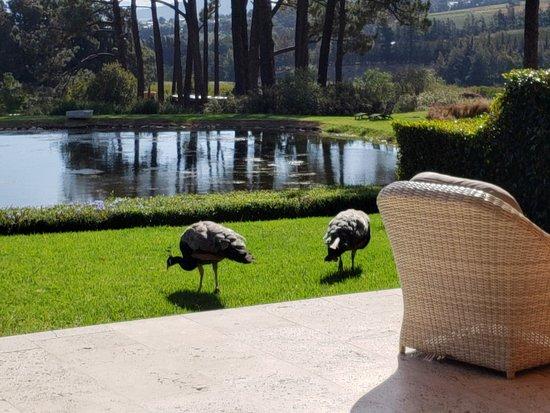 La Residence: I loved the peacocks