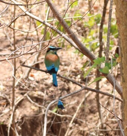 Tours Your Way: Bird wat hing