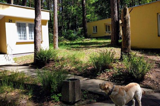 Lubniewice, Polen: Pieski mile widziane