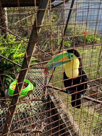 El Oasis Hotel & Restaurant: Oscar the Toucan outside the breakfast patio