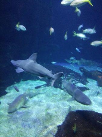 Virginia Aquarium & Marine Science Center: Shark display