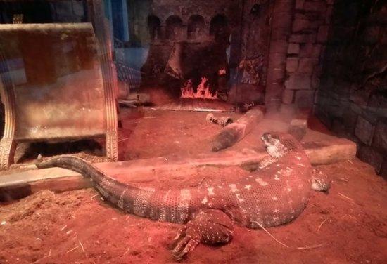 """Virginia Aquarium & Marine Science Center: """"Dragon"""" Display"""