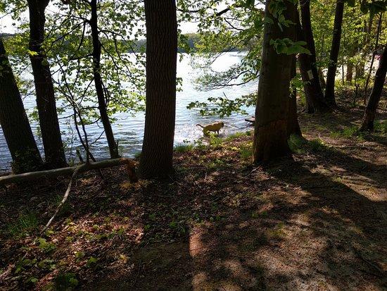 Lubniewice, Polen: Kilkadziesiąt metrów od ośrodka znajduje się jezioro Lubiąż