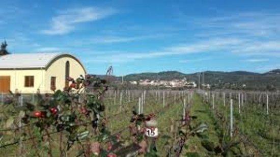 Suvereto, Italia: Azienda Agricola Terradonnà