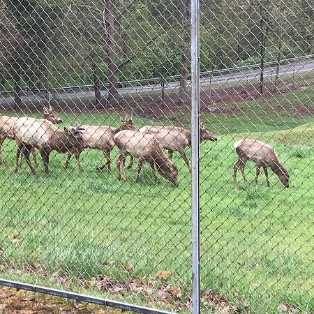 photo3 jpg - Picture of West Virginia State Wildlife Center, French