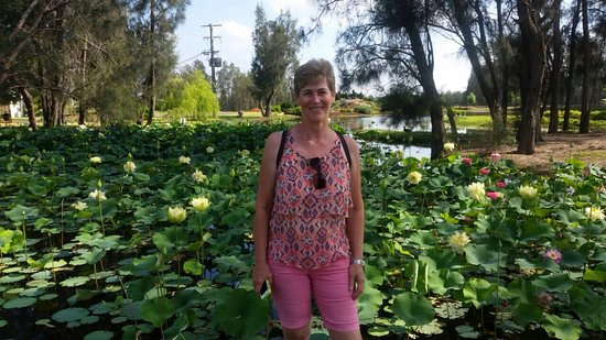 Hunter's Dream Estate: Water lilies