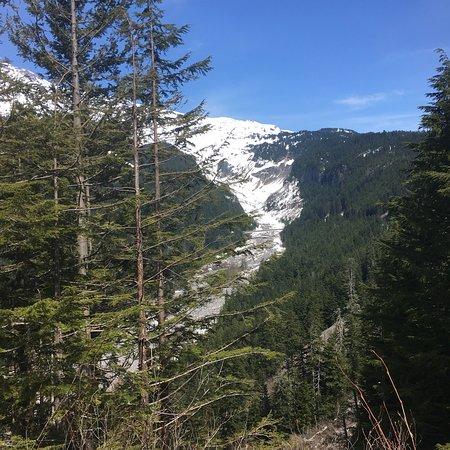 Mt. Rainier Day Trip from Seattle Φωτογραφία