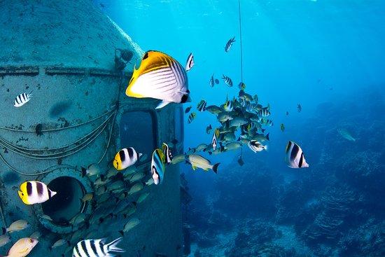 フィッシュアイマリンパーク海中展望塔, Tropical fish swimming around Underwater Observatory