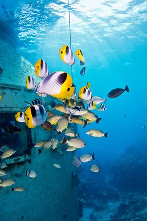 フィッシュアイマリンパーク海中展望塔, observed over 200 species of tropical fish